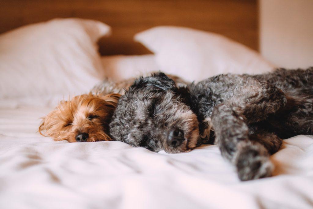 animals bed calm